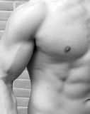Muscular Man. Fit healthy toned mans torso and bicep Royalty Free Stock Photos