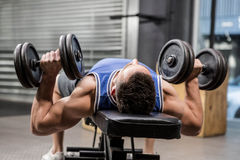 Muscular man on bench lifting dumbbells Royalty Free Stock Image