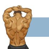 Muscular man body Royalty Free Stock Image