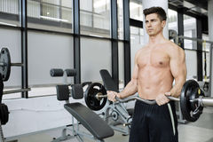 Muscular man bodybuilding in gym Royalty Free Stock Photography
