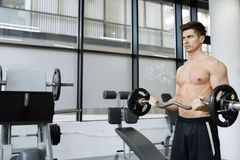 Muscular man bodybuilding in gym royalty free stock image