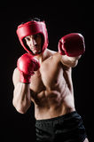 Muscular man in boxing concept Stock Images