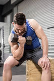 Muscular man lifting dumbbell on wooden block Royalty Free Stock Photo