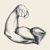 Muscular Man Right Arm Royalty Free Stock Photography