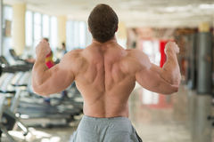 Muscular man'€™s back. Royalty Free Stock Image
