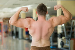 Muscular man's back. royalty free stock image
