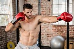 Muscular man wearing boxing gloves and posing Royalty Free Stock Image