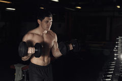 Muscular man working out in gym doing exercises with dumbbells at biceps, strong male naked torso abs. Royalty Free Stock Photography