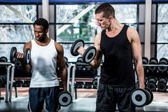 Muscular men exercising with dumbbells Royalty Free Stock Image