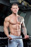 Muscular shirtless man with blue eyes and tattoo in a gray pants doing biceps curls with EZ curl bar in a gym Royalty Free Stock Photos