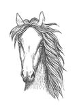 Muscular thoroughbred horse sketch symbol. Sketched symbol of riding club or horse breeding and crossbreeding theme design with muscular and powerful Royalty Free Stock Image