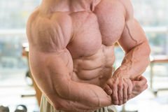 Muscular torso and arms. Royalty Free Stock Photography