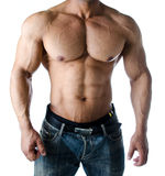 Muscular torso, pecs, abs and arms of male bodybuilder Stock Image