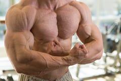 Muscular torso. Stock Photography