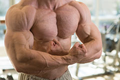 Muscular torso. Stock Photography