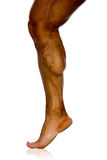 Musculature of male athlete's leg. On a white background Stock Photos