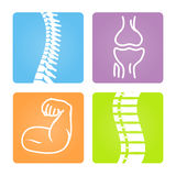 Musculoskeletal Image Icons Stock Image