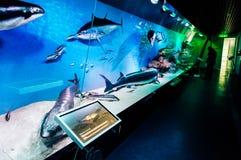 Musée d'histoire naturelle Image libre de droits
