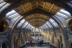 Musée d'histoire naturelle Images stock
