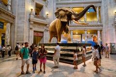 Musée National d'histoire naturelle à Washington D C Images libres de droits