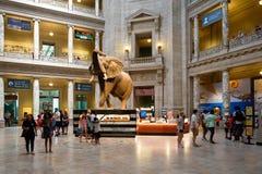 Musée National d'histoire naturelle à Washington D C Photo stock