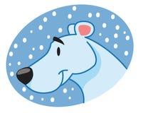 Museau d'ours blanc Image libre de droits