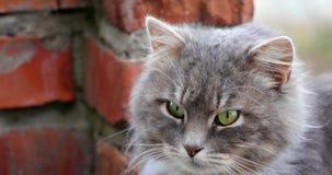 Museau d'un chat clips vidéos