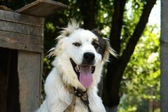 Museau d'un chien Photographie stock