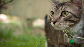 Museau de chat somnolent gris Images stock