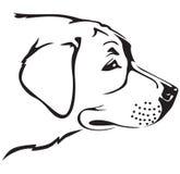 Museau de chien de chien d'arrêt Image libre de droits
