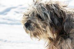 Museau de chien hirsute sans abri Photographie stock