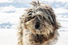Museau de chien hirsute sans abri Photo stock