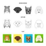 Museau de différentes races des chiens Chien de race de colley, lobladore, caniche, icônes réglées de collection de boxeur dans l Illustration de Vecteur