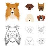 Museau de différentes races des chiens Chien de race de colley, lobladore, caniche, icônes réglées de collection de boxeur dans l Image libre de droits