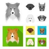 Museau de différentes races des chiens Chien de race de colley, lobladore, caniche, icônes réglées de collection de boxeur dans l Illustration Libre de Droits