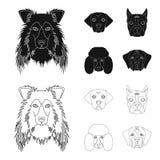 Museau de différentes races des chiens Chien de race de colley, lobladore, caniche, icônes réglées de collection de boxeur dans l Illustration Stock