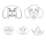 Museau de différentes races des chiens Poursuivez la race du teckel, petit chien d'appartement, le briquet, icônes réglées de col Images stock