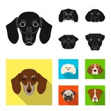 Museau de différentes races des chiens Poursuivez la race du teckel, petit chien d'appartement, le briquet, icônes réglées de col Images libres de droits