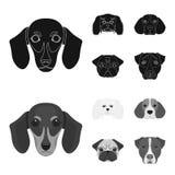 Museau de différentes races des chiens Poursuivez la race du teckel, petit chien d'appartement, le briquet, icônes réglées de col Photo stock