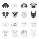 Museau de différentes races des chiens Poursuivez la race Stafford, Spitz, Risenschnauzer, icônes réglées de collection de berger Photos stock