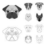 Museau de différentes races des chiens Poursuivez la race Stafford, Spitz, Risenschnauzer, icônes réglées de collection de berger Illustration Libre de Droits