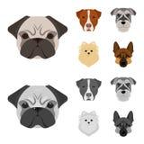 Museau de différentes races des chiens Poursuivez la race Stafford, Spitz, Risenschnauzer, icônes réglées de collection de berger Illustration de Vecteur