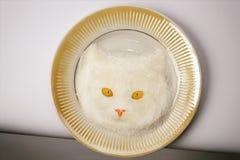 Museau du ` s de chat de sucre et de fruit Photos libres de droits