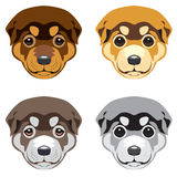 Museaux de Puppy sur le fond blanc Photographie stock
