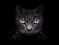 Muselez un chat Image libre de droits