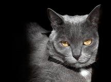 Muselez un chat Photographie stock libre de droits