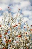Museo德洛丽丝奥尔梅多与红色花和天空的树枝与云彩 免版税库存图片
