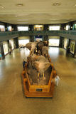 Museo americano de la historia natural fotos de archivo libres de regalías
