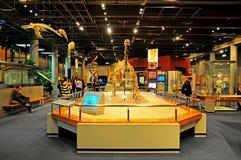 Museo de Hong-Kong de los fósiles Fotos de archivo