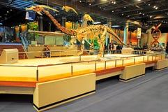 Museo de Hong-Kong de los fósiles Fotografía de archivo